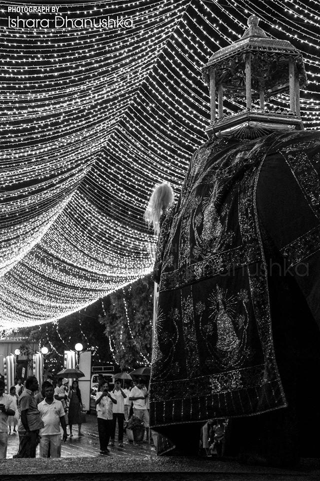 Photographer, Ishara Dhanushka