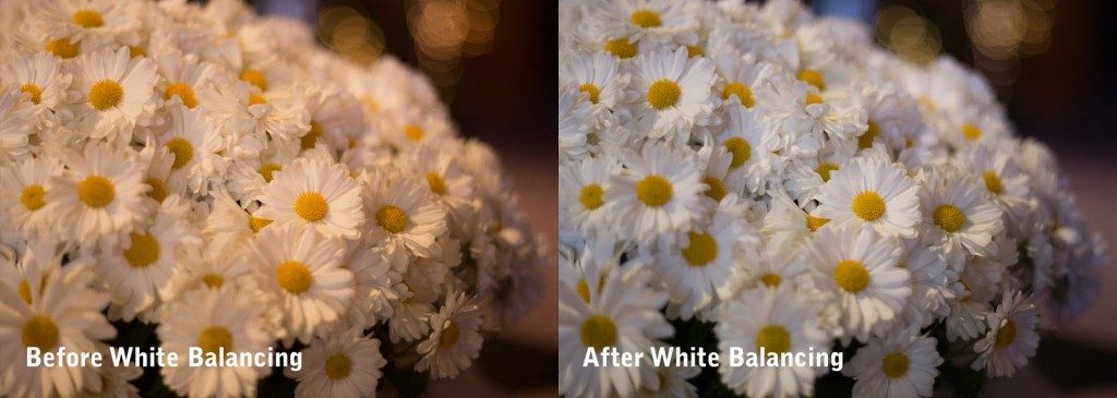 Chathura Jayasinghe Photography, White Balance Example